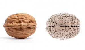 02-Walnut-BrainFoods-That-Look-Like-Body-Parts-1-300x177